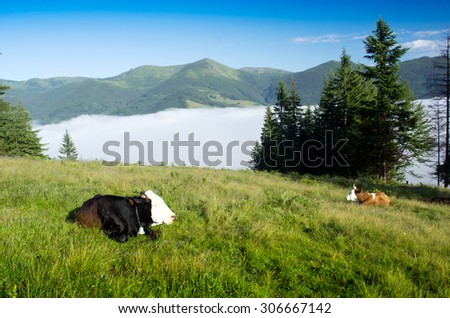 Beautiful landscape with green hills and a herd of cows - stock photo