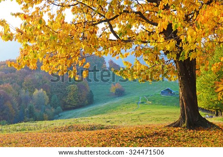 Beautiful landscape with magic autumn trees and fallen leaves in the mountains (harmony, relaxation - concept) - stock photo
