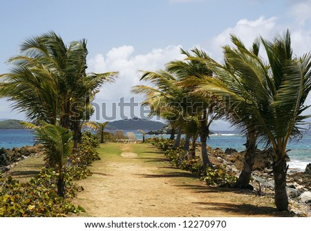 beautiful landscape with palm tree lined pathway