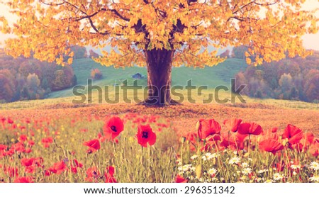 Beautiful landscape with poppy flowers and single tree with yellow autumn foliage in the mountains in pastel colors. Instahram effect. (natural background) - stock photo