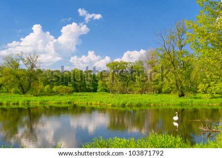 Beautiful landscape with swan in the flood waters of Narew river, Poland. - stock photo