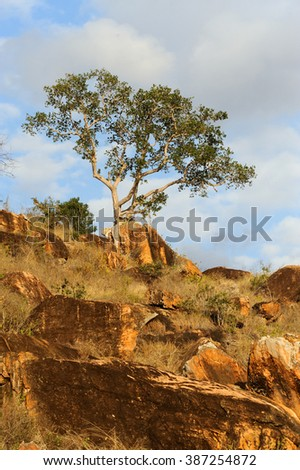 Beautiful landscape with tree in Africa