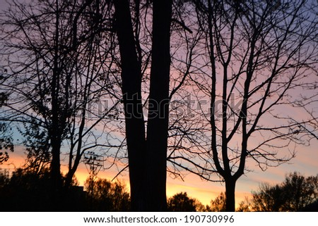 Beautiful landscape with trees at sunset.