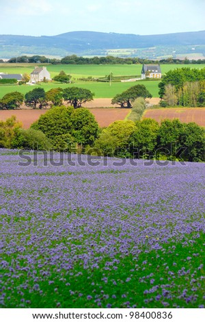 Beautiful lavender field in France - stock photo