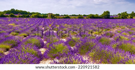Beautiful lavender fields near Valensole, Provence, France. - stock photo