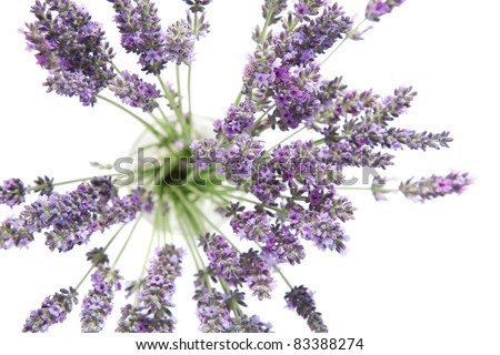 Beautiful lavender flowers on a white background top view