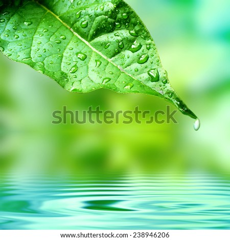 Beautiful leaf on a calm  and fresh blue water