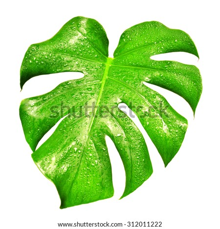 Beautiful leaf with drops isolated on white background - stock photo