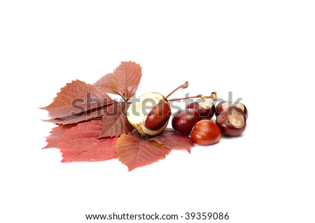 Beautiful leaves and chestnuts isolated on a white background.