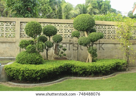 Beautiful Leaves In The Garden, Used For Advertising Design, Home Garden  Landscape Design,