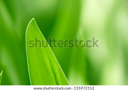 beautiful leaves of grass in nature