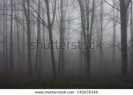 beautiful light in a autumun forest - stock photo