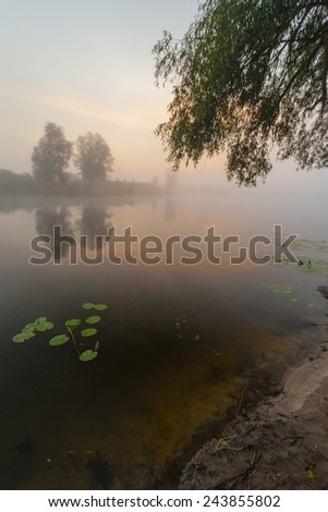 beautiful lilies on a lake. The Ukraine - stock photo