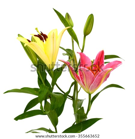 beautiful lily bouquet isolated on white background - stock photo
