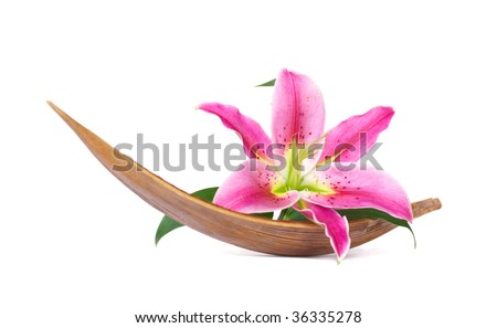 Beautiful lily flower set on a dried coco leaf - stock photo