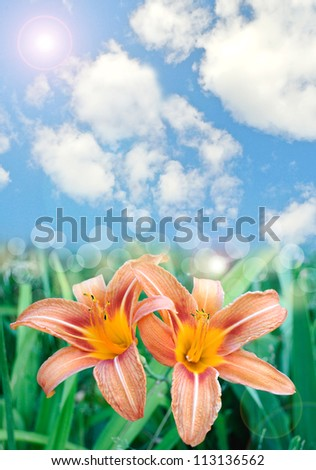 Beautiful lily flowers background with lens flare effect - stock photo