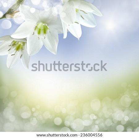 Beautiful Lily Flowers Border  - stock photo