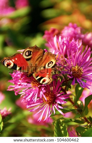 beautiful little butterfly on a purple flower