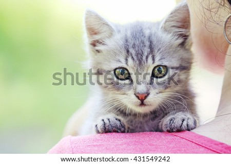 Beautiful little cat on female hands, outdoors - stock photo