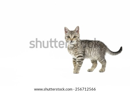Beautiful little kitten on white background