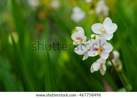 Beautiful little orchid with soft background