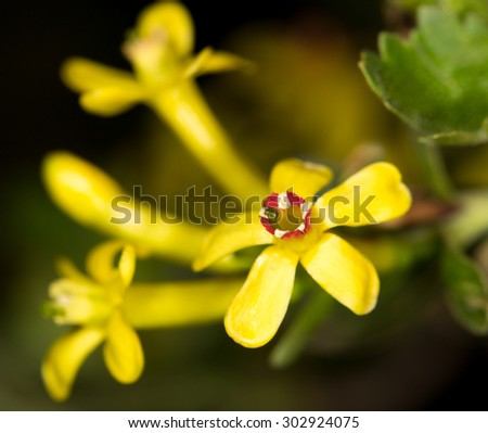 Beautiful little yellow flower nature stock photo edit now beautiful little yellow flower in nature mightylinksfo