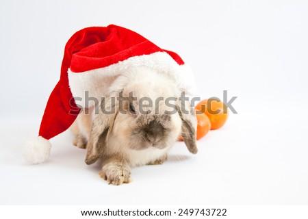 Beautiful lop-eared rabbit in Santa Claus hat - stock photo