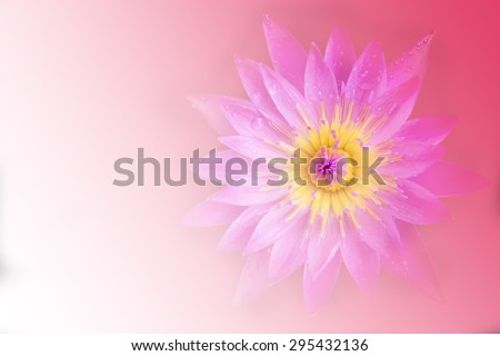 beautiful lotus blooming blur  background  - stock photo