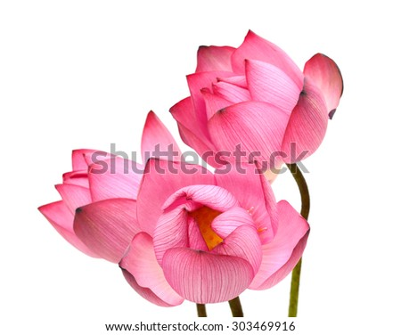Beautiful lotus flower bouquet isolated on white background