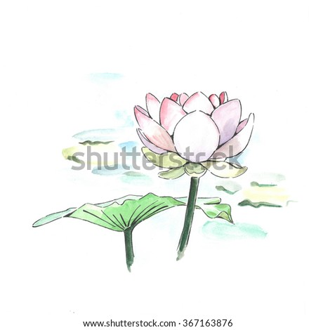 beautiful lotus flower hand-drawn with watercolor