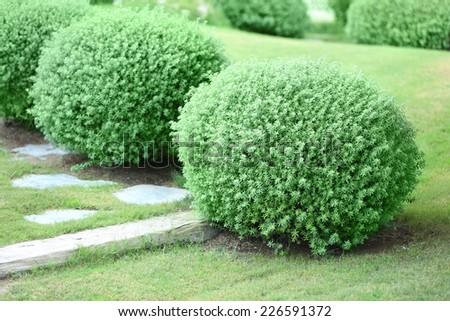 Beautiful lush bushes in garden - stock photo