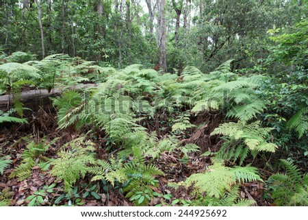 Beautiful lush rainforest in Queensland, Australia - stock photo