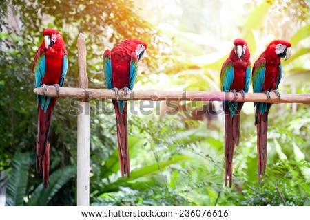 Beautiful macaws perched on a wooden post enjoying the warmth of the evening sun - stock photo