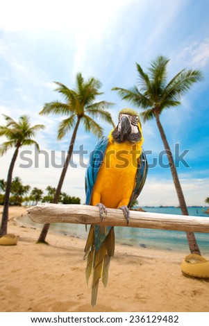 Beautiful macaws perched on a wooden post enjoying the warmth of the evening sun by the beach - stock photo