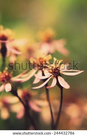 Beautiful macro flowers in retro style - stock photo