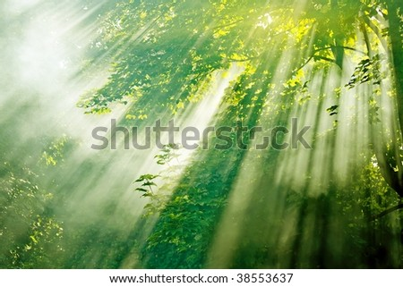 beautiful magical sunlight in misty forest - stock photo