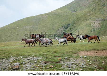 Beautiful many-coloured horses going away - stock photo