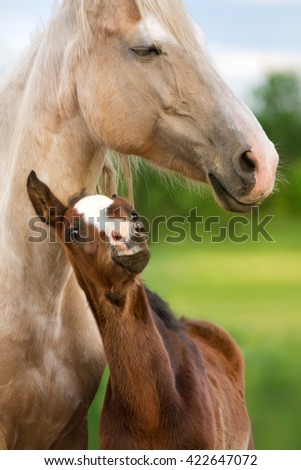 Beautiful mare with foal close up portrait - stock photo