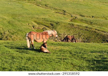 Beautiful mare with foal on green mountain meadow - stock photo
