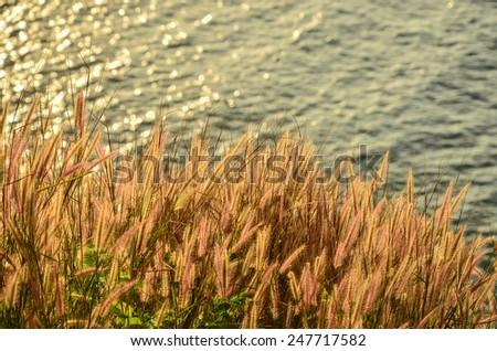 Beautiful meadow - stock photo