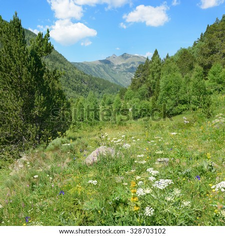 beautiful meadow covered with forest - stock photo