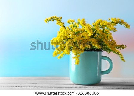 Beautiful mimosa flowers on light blue background