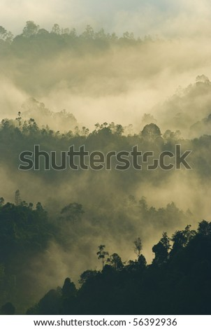 beautiful misty early morning forest with a bit of sunlight - stock photo