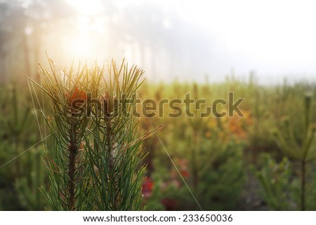 Beautiful misty morning on the edge of the forest - stock photo
