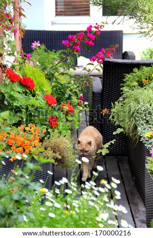 Beautiful modern terrace with a lot of flowers and funny cat - stock photo