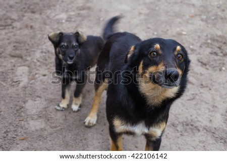 beautiful mongrel puppy - stock photo