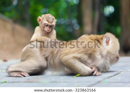 Beautiful monkey family in a green park