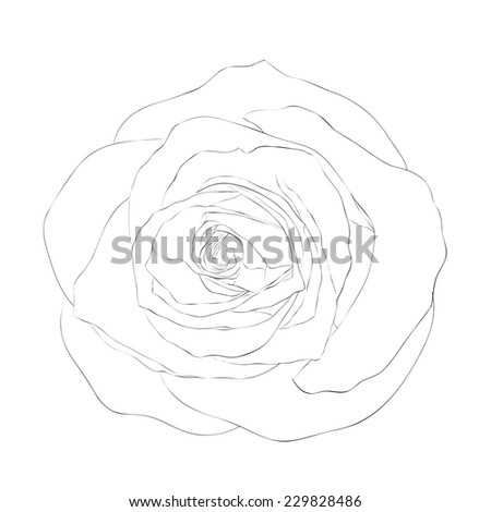 beautiful monochrome black and white rose isolated on white background. Hand-drawn contour lines and strokes. additional format in the profile of the artist - stock photo