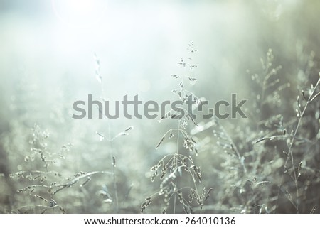 Beautiful morning blue color blurred meadow at sunrise with flare. Color filter effect used. Selective focus used. - stock photo