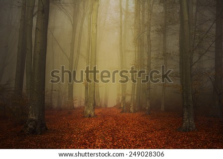 Beautiful morning in the forest on a foggy day - stock photo